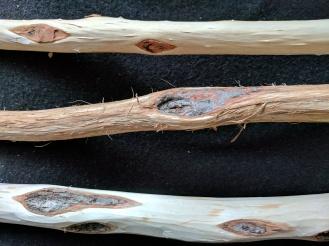 three-peeled-sticks